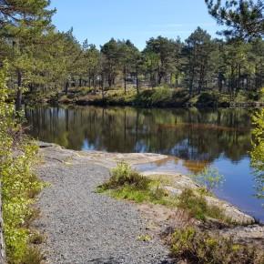 Ukens turforslag uke 20: Rundtur fra sentrum via Reveråsen, Seljelia ogHolta